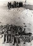 Unzahlige Edelfische starben